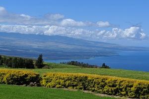 Kohala Coast Year in Review